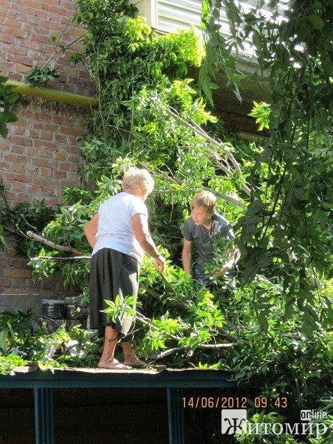 Дерево, що впало на будинок, житомиряни змушені прибирати самостійно (ФОТО), фото-5