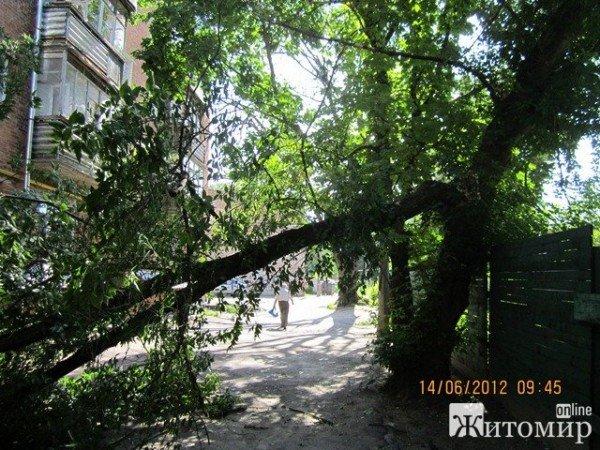 Дерево, що впало на будинок, житомиряни змушені прибирати самостійно (ФОТО), фото-6