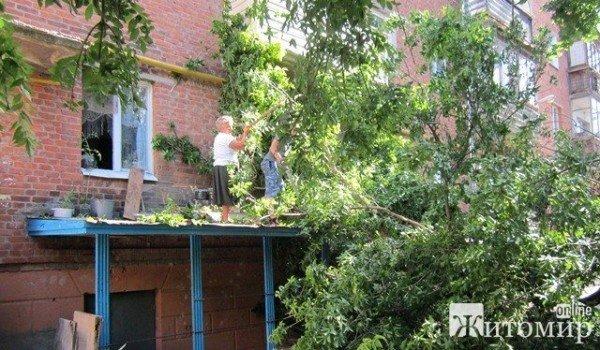 Дерево, що впало на будинок, житомиряни змушені прибирати самостійно (ФОТО), фото-7