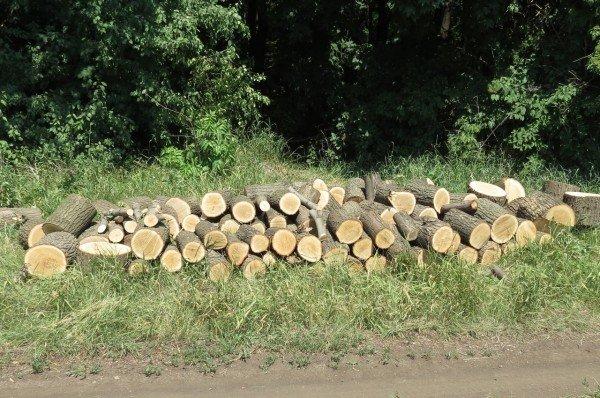 В Артемовском районе неизвестные уничтожают ценные дубы, фото-3