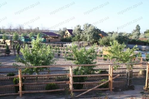 В зоопарке Бердянска родились детеныши леопарда (ФОТО), фото-1