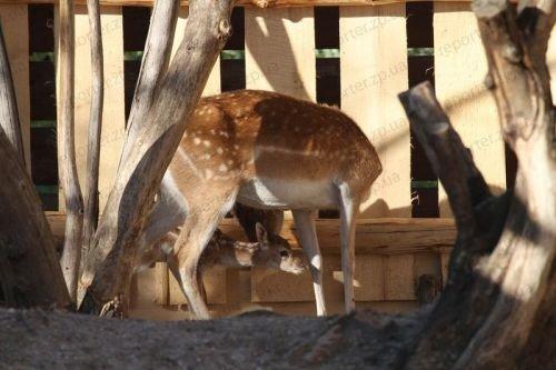 В зоопарке Бердянска родились детеныши леопарда (ФОТО), фото-5