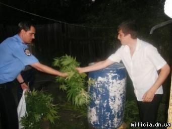 Горловские правоохранители изъяли 800 кустов конопли, фото-1