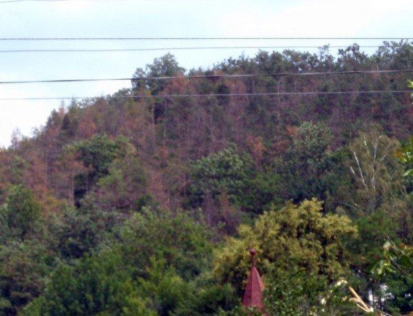 Що сталося з лісом у Чортківському районі? (ФОТО), фото-3