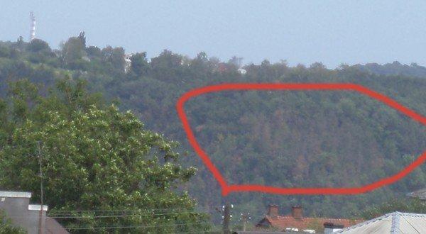 Що сталося з лісом у Чортківському районі? (ФОТО), фото-1