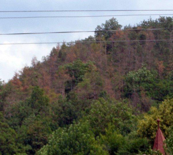 Що сталося з лісом у Чортківському районі? (ФОТО), фото-2