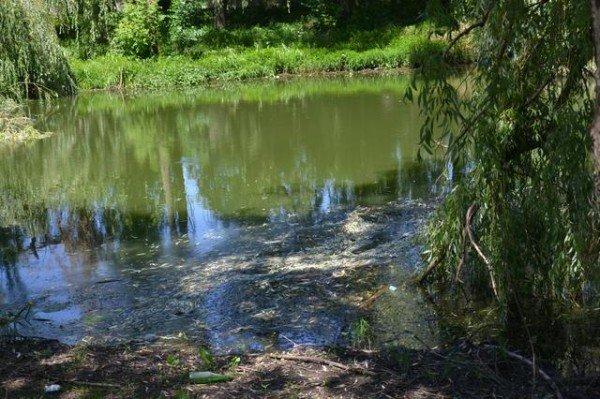 У Рівному в Усті знову масово гине риба (ФОТО), фото-2