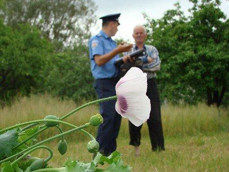 У Володарськ-Волинському районі боролися з посівами маку та конопель, фото-5