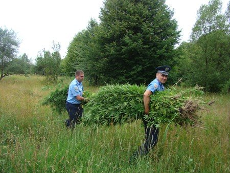 У Володарськ-Волинському районі боролися з посівами маку та конопель, фото-6