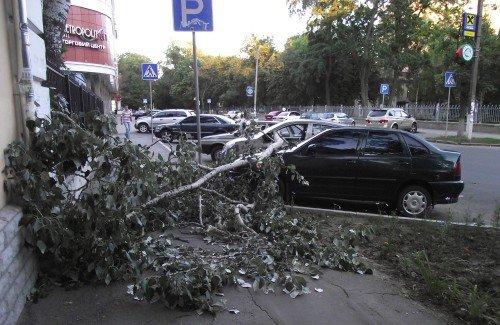 В Полтаве упавшая ветка изувечила два автомобиля (ФОТО), фото-1