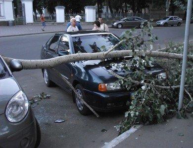 В Полтаве упавшая ветка изувечила два автомобиля (ФОТО), фото-2