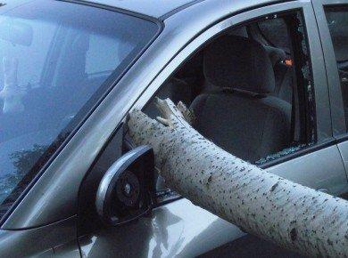 В Полтаве упавшая ветка изувечила два автомобиля (ФОТО), фото-3