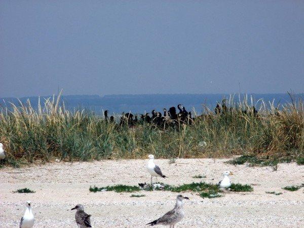 В Донецкой области разорили уникальные гнездовья кудрявых пеликанов (фото), фото-3