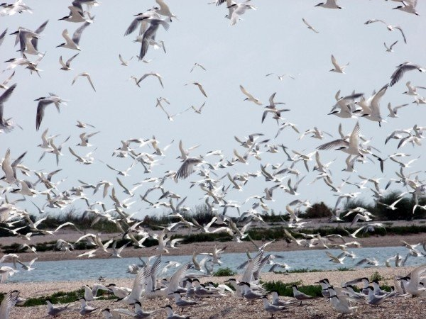 В Донецкой области разорили уникальные гнездовья кудрявых пеликанов (фото), фото-5