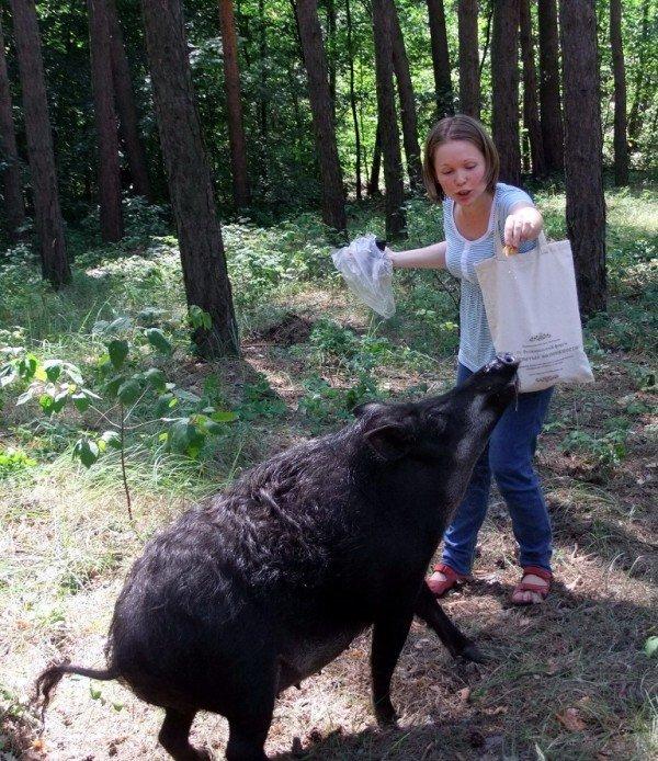 В Донецкой области открылась новая экологическая тропа (фото), фото-1