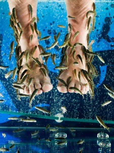 В одесском салоне красоты пилинг ног делают аквариумные рыбки (Фотофакт), фото-1