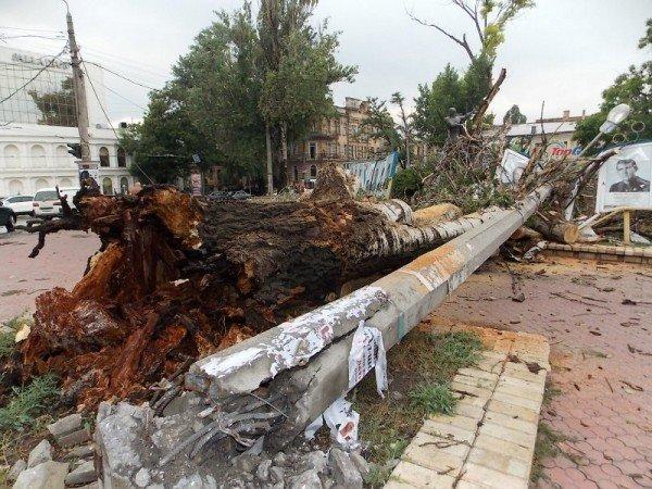 В Одессе дерево рухнуло на памятник «Спартаку» и портреты олимпийцев  (Фото), фото-1
