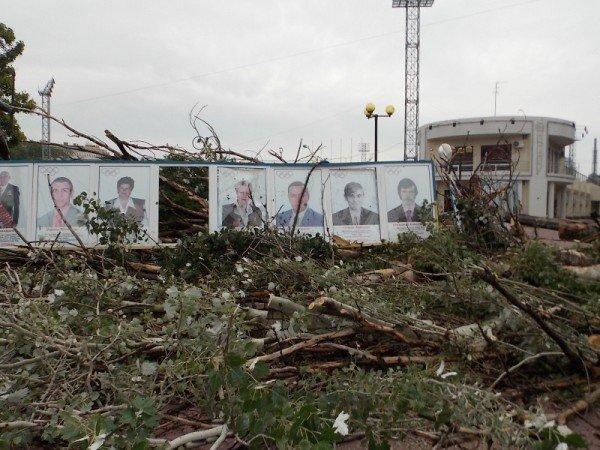 В Одессе дерево рухнуло на памятник «Спартаку» и портреты олимпийцев  (Фото), фото-3
