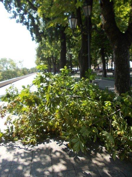 В Одессе все еще убирают последствия вчерашней стихии (Фото), фото-5