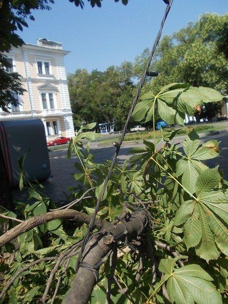 В Одессе все еще убирают последствия вчерашней стихии (Фото), фото-6