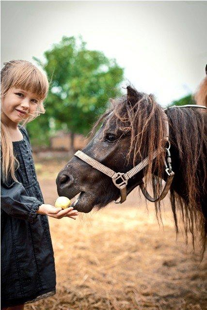 «Маленькая ферма» — новый объект семейного отдыха в Ялте, фото-2