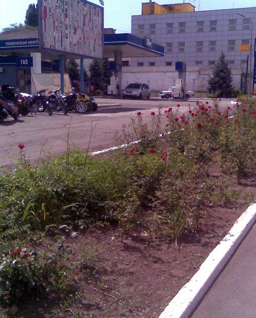 В Мариуполе пьяный романтик похитил из городской клумбы розы для жены (ФОТО), фото-1