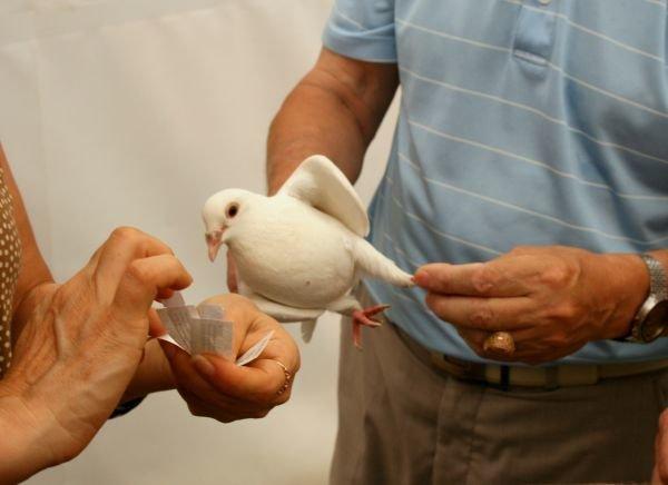 Сотня белоснежных голубей улетели в небо -  исполнять пожелания одесситов (Фото), фото-1