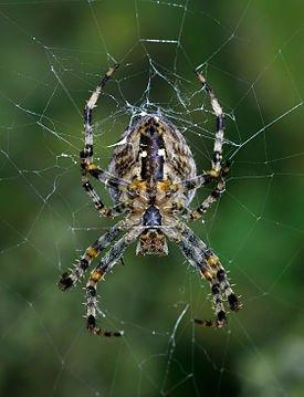 В Мариуполе женщину укусил неизвестный паук, фото-1