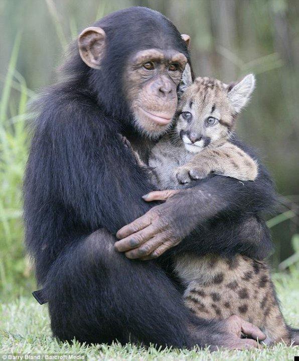 тварин илюбовь 3