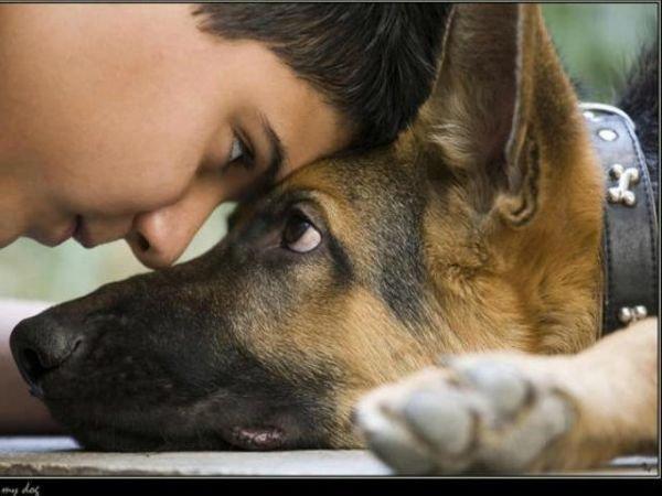 собака і дитина