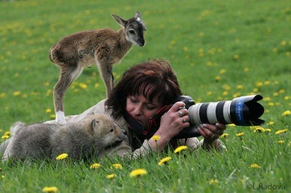 тварини любовь 1