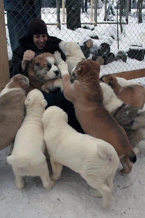 тварини любовь
