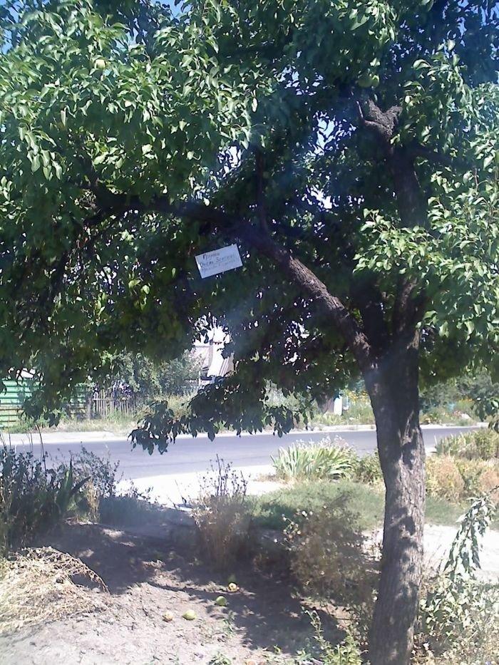 «Покращення» для пенсионеров: в Мариуполе старики собирают фрукты в частном секторе, потому что купить на рынке не в состоянии (ФОТО), фото-2