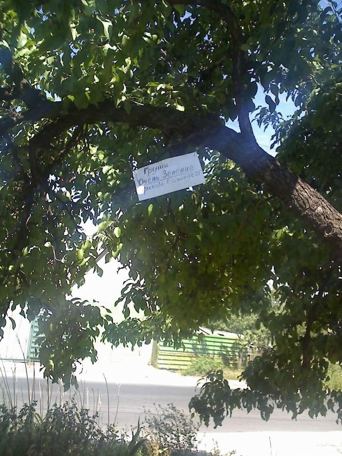 «Покращення» для пенсионеров: в Мариуполе старики собирают фрукты в частном секторе, потому что купить на рынке не в состоянии (ФОТО), фото-1