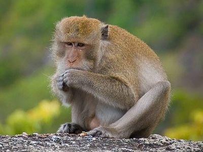Скандал! В мариупольском зоопарке обезьянка порвала женщине платье, фото-1