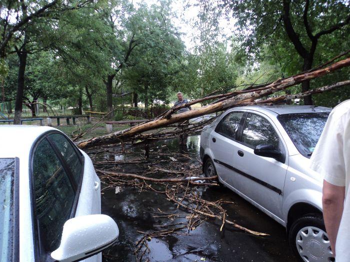 В Мариуполе ураган валил деревья и рвал провода (ФОТО), фото-1
