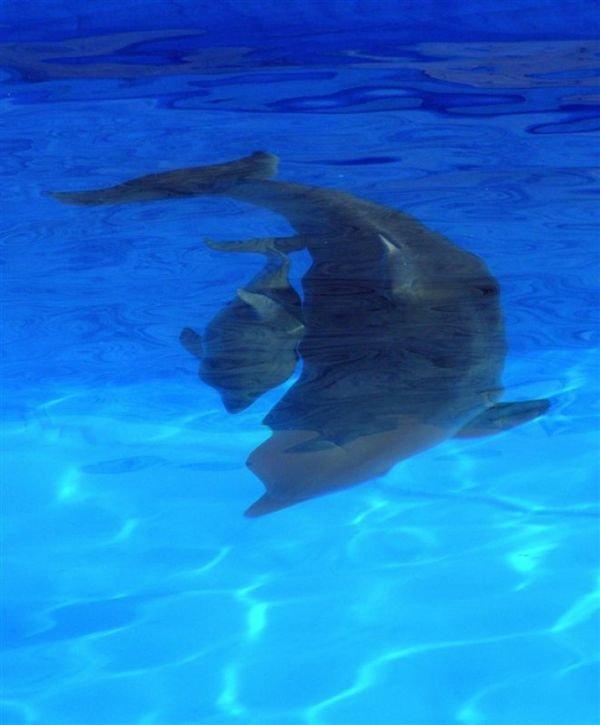 В Севастополе родился дельфин Сеня (ФОТО), фото-1