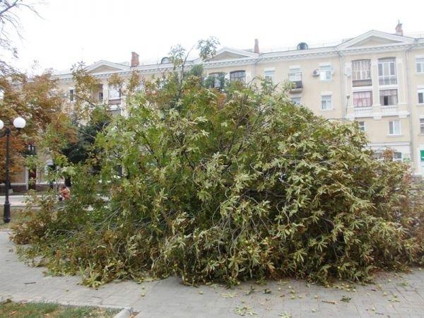 В центре Артемовска пилят каштаны. Продолжается реконструкция площади Свободы (ФОТО), фото-5