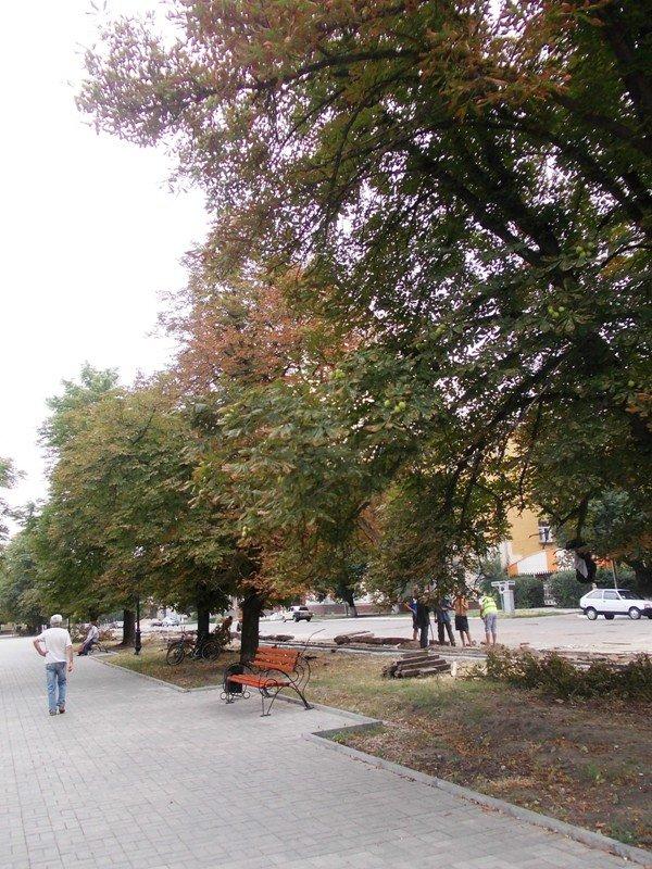 В центре Артемовска пилят каштаны. Продолжается реконструкция площади Свободы (ФОТО), фото-7