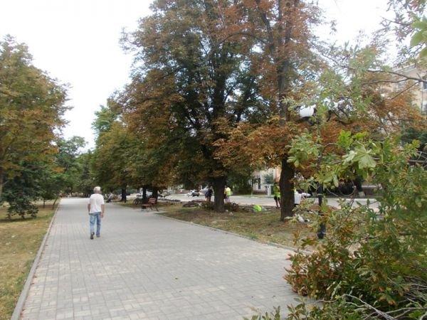 В центре Артемовска пилят каштаны. Продолжается реконструкция площади Свободы (ФОТО), фото-6