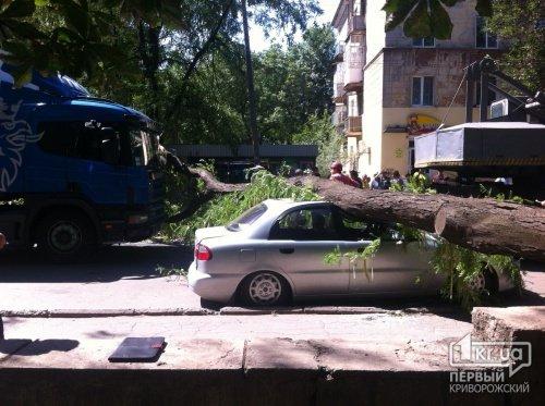 В Кривом Роге упавшее дерево проломило крышу автомобиля (ФОТО), фото-1
