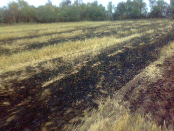 Фото сухой травы и стерни от 08.08.2012г с. Озеряновка, в Широеой балке (2)