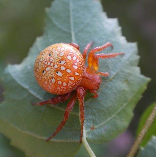 Мариупольские многоэтажки «атакуют» странные оранжевые пауки (ФОТО), фото-2