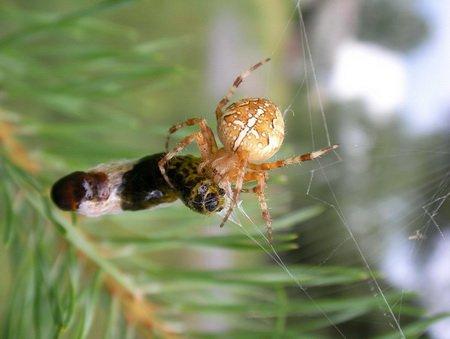 Мариупольские многоэтажки «атакуют» странные оранжевые пауки (ФОТО), фото-1
