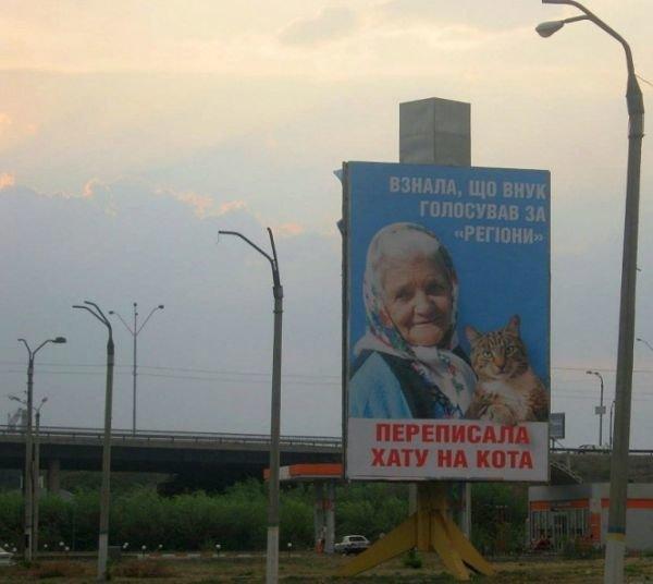 Днепродзержинские «бабушка с котом» подвергаются преследованиям и находятся в розыске (ФОТО), фото-1
