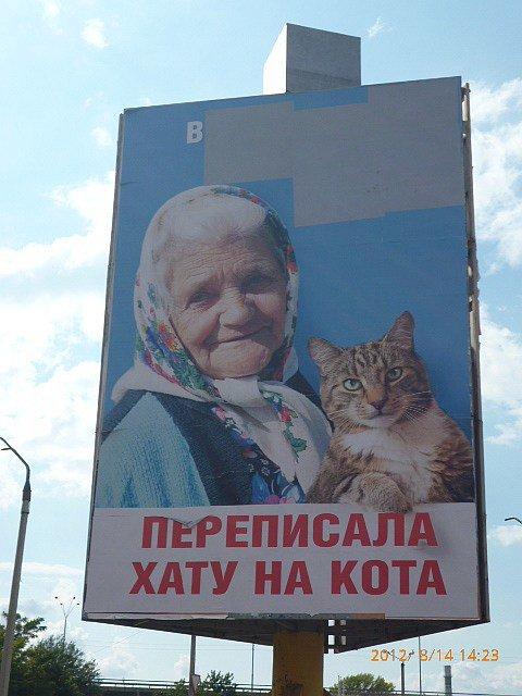 Разработчик билборда про бабушку и кошку находится в розыске, фото-1
