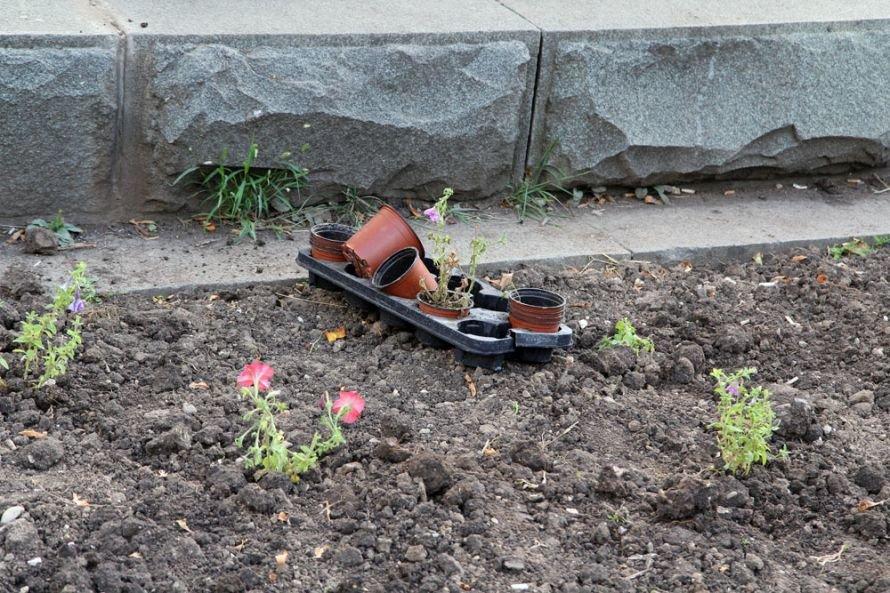 ФОТОФАКТ: Милицию просят охранять цветы в сквере Тренева, фото-1