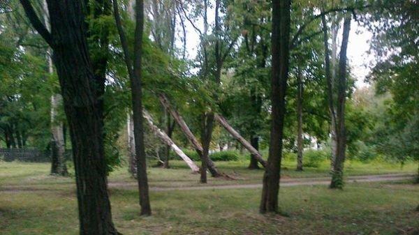 Жизни криворожан угрожают «пизанские деревья» (ФОТО), фото-1