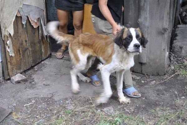 Мы в ответе за тех, кого приручили? В Мариуполе бездомная морит голодом породистых собак, фото-3