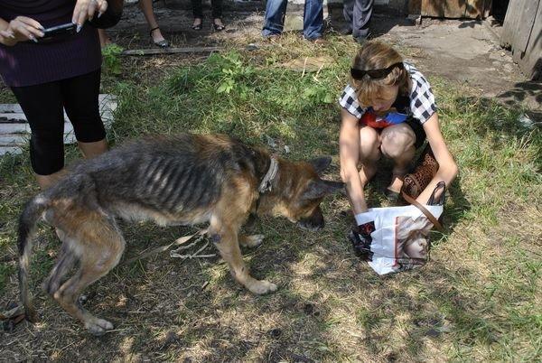 Мы в ответе за тех, кого приручили? В Мариуполе бездомная морит голодом породистых собак, фото-4